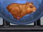 hamster-daycare