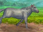 my-pet-horse