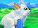 my-rabbit