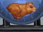 Hamster Daycare